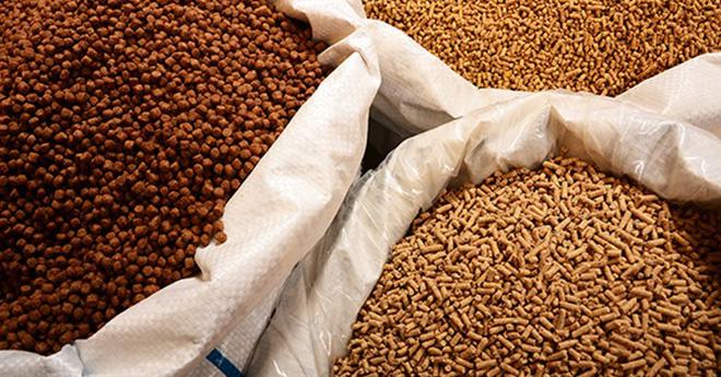 High feed prices cut into animal husbandry's profits