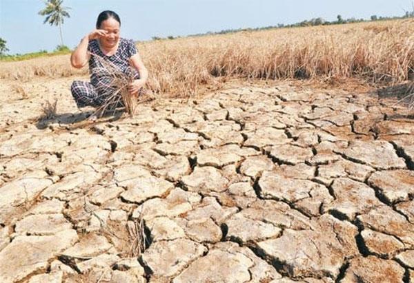 El Nino, storm,  drought, salinity intrusion, Vietnam economy, Vietnamnet bridge, English news about Vietnam, Vietnam news, news about Vietnam, English news, Vietnamnet news, latest news on Vietnam, Vietnam