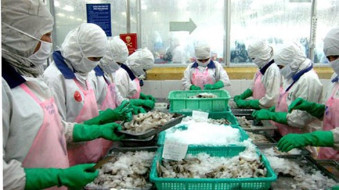 Vietnam looks for shrimp farming to save the Mekong Delta, vietnam economy, business news, vn news, vietnamnet bridge, english news, Vietnam news, news Vietnam, vietnamnet news, vn news, Vietnam net news, Vietnam latest news, Vietnam reaking news