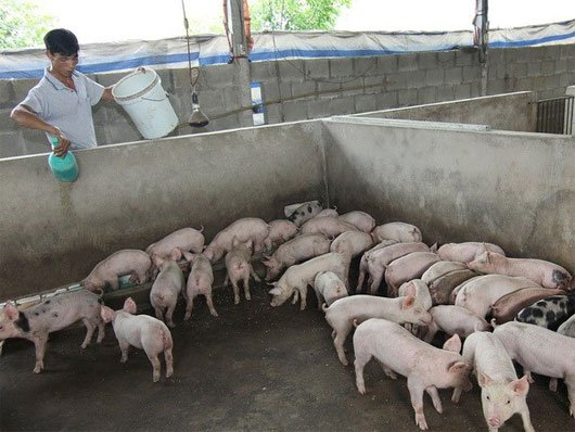 pig farming business plan