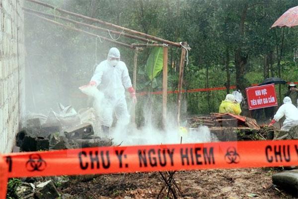 Vietnam threatened by new strain of bird flu