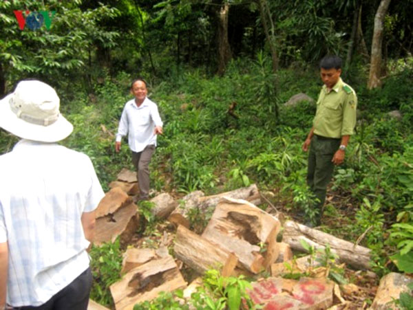 Lack of forest management, increasing deforestation, Vietnam economy, Vietnamnet bridge, English news about Vietnam, Vietnam news, news about Vietnam, English news, Vietnamnet news, latest news on Vietnam, Vietnam
