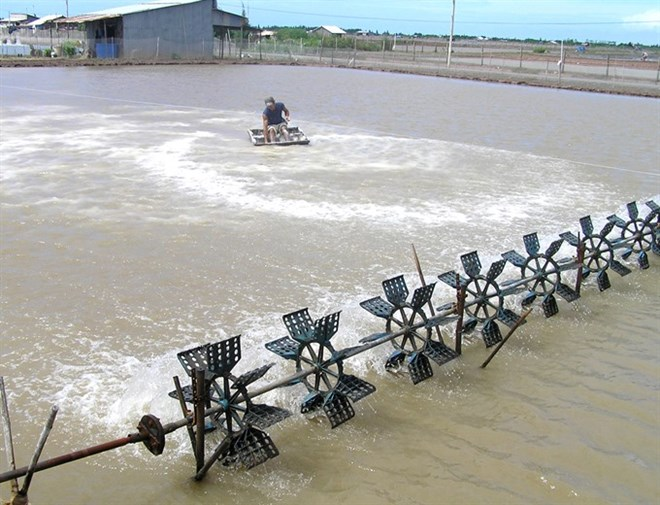 Shrimp aids climate change battle in VN, environmental news, sci-tech news, vietnamnet bridge, english news, Vietnam news, news Vietnam, vietnamnet news, Vietnam net news, Vietnam latest news, Vietnam breaking news, vn news
