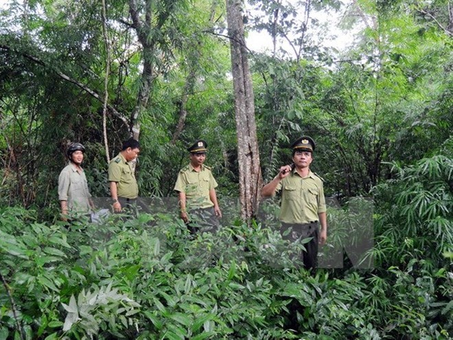 Forest coverage reaches over 40 percent: ministry, environmental news, sci-tech news, vietnamnet bridge, english news, Vietnam news, news Vietnam, vietnamnet news, Vietnam net news, Vietnam latest news, Vietnam breaking news, vn news