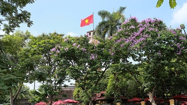 Hanoi turns purple with giant crape-myrtle flowers, social news, vietnamnet bridge, english news, Vietnam news, news Vietnam, vietnamnet news, Vietnam net news, Vietnam latest news, vn news, Vietnam breaking news