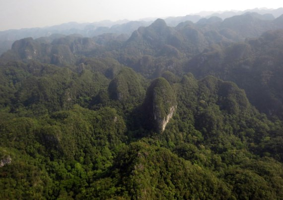 500 years old limestone coniferous forest found in Phong Nha-Ke Bang, environmental news, sci-tech news, vietnamnet bridge, english news, Vietnam news, news Vietnam, vietnamnet news, Vietnam net news, Vietnam latest news, Vietnam breaking news, vn news