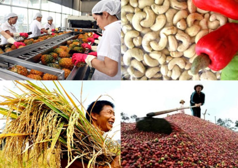 VN agriculture firms receive Gov't funds, vn agriculture, vietnam economy, business news, vn news, vietnamnet bridge, english news, Vietnam news, news Vietnam, vietnamnet news, vn news, Vietnam net news, Vietnam latest news, Vietnam breaking news