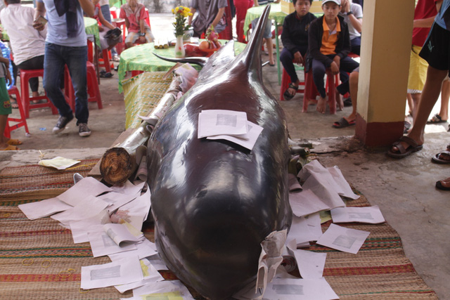Giant dead whales solemnly buried by fishermen, social news, vietnamnet bridge, english news, Vietnam news, news Vietnam, vietnamnet news, Vietnam net news, Vietnam latest news, vn news, Vietnam breaking news
