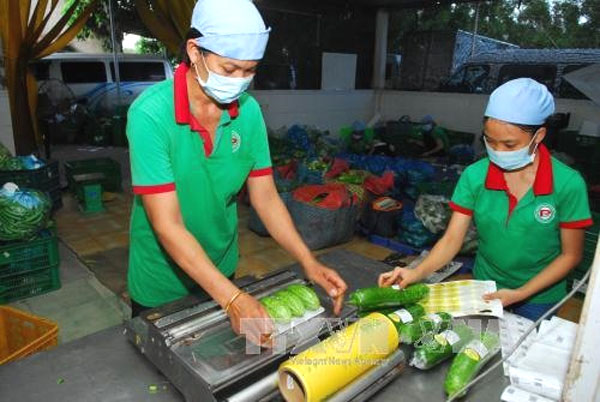 HCM City to monitor produce supply chain safety