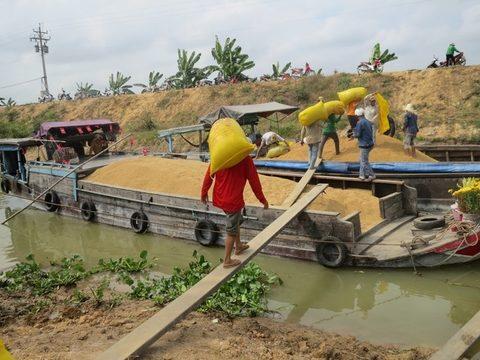 Future bright for Vietnam's rice exporters, vietnam economy, business news, vn news, vietnamnet bridge, english news, Vietnam news, news Vietnam, vietnamnet news, vn news, Vietnam net news, Vietnam latest news, Vietnam breaking news