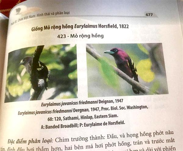 VN bird book, professor Vo Quy, species of birds, Vietnam economy, Vietnamnet bridge, English news about Vietnam, Vietnam news, news about Vietnam, English news, Vietnamnet news, latest news on Vietnam, Vietnam