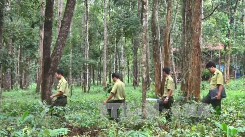 Central Highlands to plant 12,500 hectares of forest, Vietnam environment, climate change in Vietnam, Vietnam weather, Vietnam climate, pollution in Vietnam, environmental news, sci-tech news, vietnamnet bridge, english news, Vietnam news, news Vietnam, v