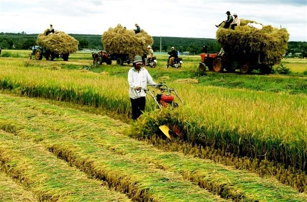 Land pooling needed to boost Vietnam's agriculture