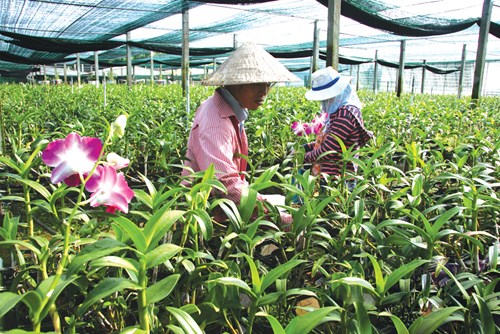 vietnam economy, business news, vn news, vietnamnet bridge, english news, Vietnam news, news Vietnam, vietnamnet news, vn news, Vietnam net news, Vietnam latest news, Vietnam breaking news, agriculture, land fund, MARD
