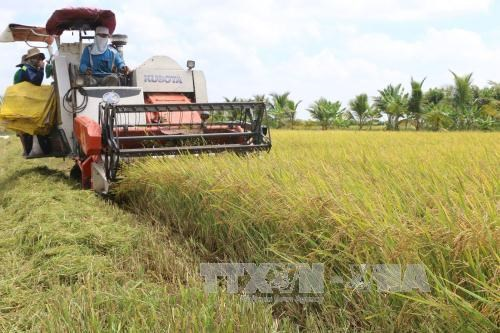 Network formed to create climate resilient rice in Mekong Delta, environmental news, sci-tech news, vietnamnet bridge, english news, Vietnam news, news Vietnam, vietnamnet news, Vietnam net news, Vietnam latest news, Vietnam breaking news, vn news