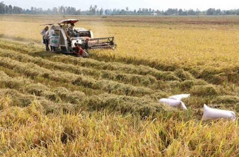 Can Tho, US group to cooperate in biomass production, Needy people in northwest provided with soft loans, Japan's book on natural disasters introduced to Vietnamese, Financial mechanisms piloted for ODA-used health care projects