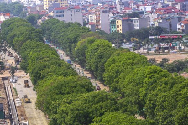 Please save the trees on Pham Van Dong Street