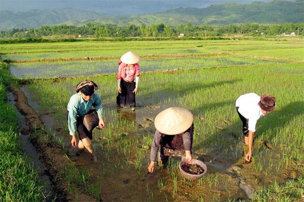 Invasive species, bird species, plant species, Vietnam economy, Vietnamnet bridge, English news about Vietnam, Vietnam news, news about Vietnam, English news, Vietnamnet news, latest news on Vietnam, Vietnam