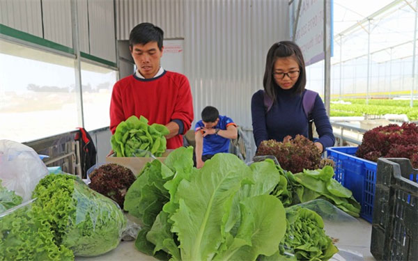 Da Lat attract tourists, farm tours, Vietnam economy, Vietnamnet bridge, English news about Vietnam, Vietnam news, news about Vietnam, English news, Vietnamnet news, latest news on Vietnam, Vietnam