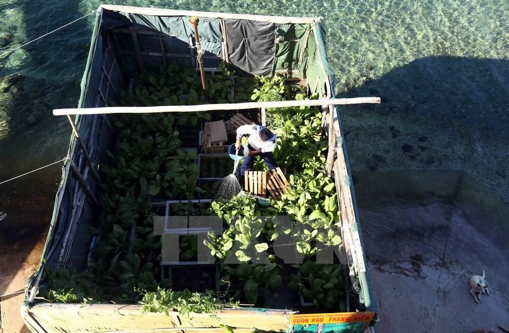 Vegetable gardens green Truong Sa archipelago