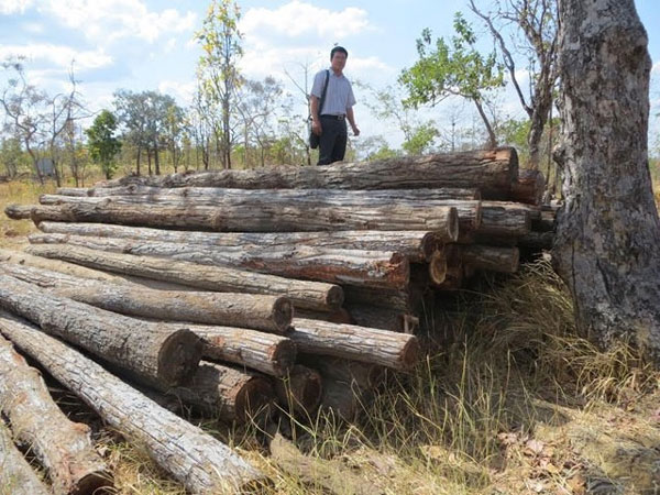 Dak Lak, illegal logging, investigate, Vietnam economy, Vietnamnet bridge, English news about Vietnam, Vietnam news, news about Vietnam, English news, Vietnamnet news, latest news on Vietnam, Vietnam