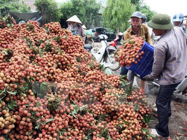 vietnam economy, business news, vn news, vietnamnet bridge, english news, Vietnam news, news Vietnam, vietnamnet news, vn news, Vietnam net news, Vietnam latest news, Vietnam breaking news, fruit export, mango, US market