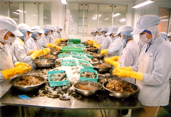 Breeding shrimp, aquatic products, sustainable shrimp farming, Vietnam economy, Vietnamnet bridge, English news about Vietnam, Vietnam news, news about Vietnam, English news, Vietnamnet news, latest news on Vietnam, Vietnam