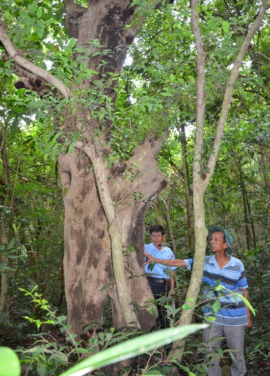 War veteran now fights for his local forest, environmental news, sci-tech news, vietnamnet bridge, english news, Vietnam news, news Vietnam, vietnamnet news, Vietnam net news, Vietnam latest news, Vietnam breaking news, vn news