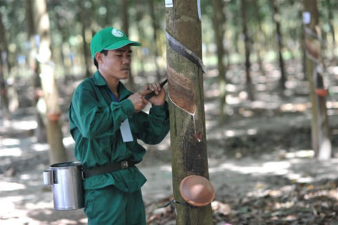 IPO to look out for: VN Rubber Group's mega-land bank