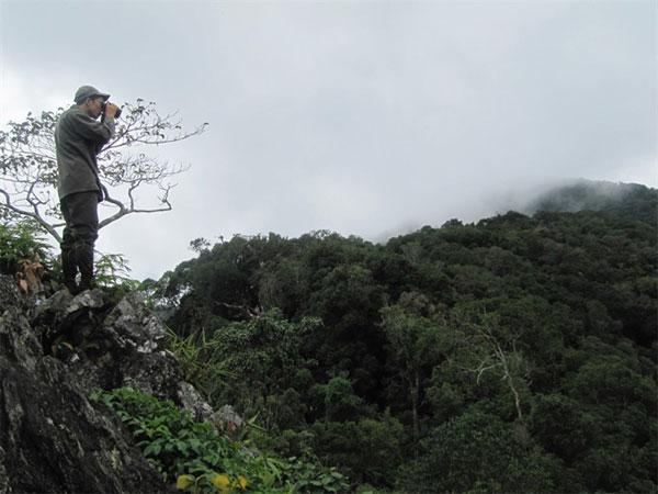 Quang Nam, protect endangered langurs, National Kon Ka Kinh Park, Vietnam economy, Vietnamnet bridge, English news about Vietnam, Vietnam news, news about Vietnam, English news, Vietnamnet news, latest news on Vietnam, Vietnam
