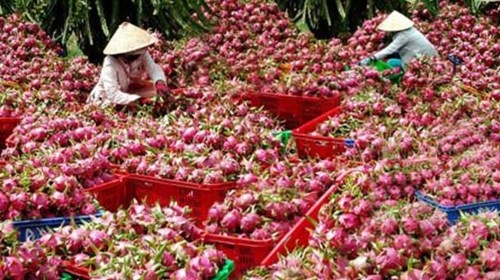 Vietnamese dragon fruit exported to 40 markets, Price of pig down, breeders sell pork on roadside, Vinataba-Philip Morris to reclaim over $2 million in tax refund, PM points out shortcomings in agricultural production