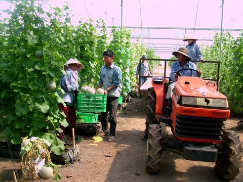 Funds needed for Vietnam's hi-tech agriculture