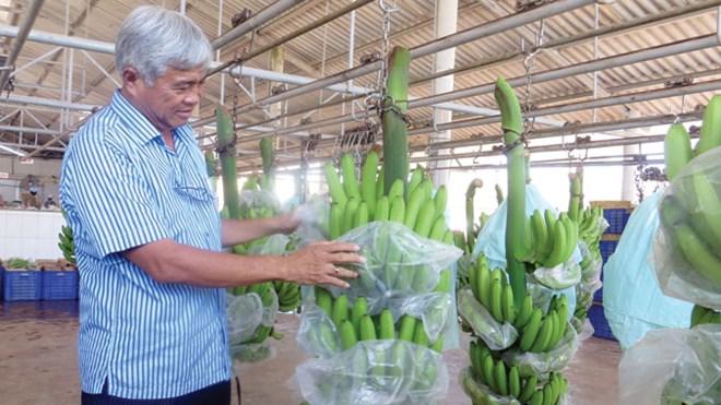 vietnam economy, business news, vn news, vietnamnet bridge, english news, Vietnam news, news Vietnam, vietnamnet news, vn news, Vietnam net news, Vietnam latest news, Vietnam breaking news,  hi-tech agriculture, credit package, MARD