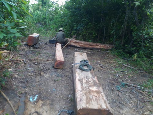 Rampant deforestation in the central region