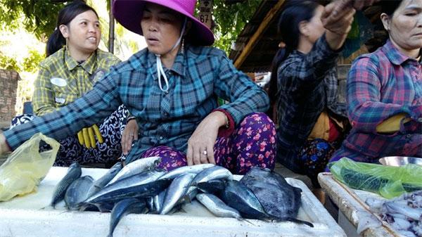 Quang Nam, Tam Hai Island, eco-tour services, island lifestyle, Vietnam economy, Vietnamnet bridge, English news about Vietnam, Vietnam news, news about Vietnam, English news, Vietnamnet news, latest news on Vietnam, Vietnam