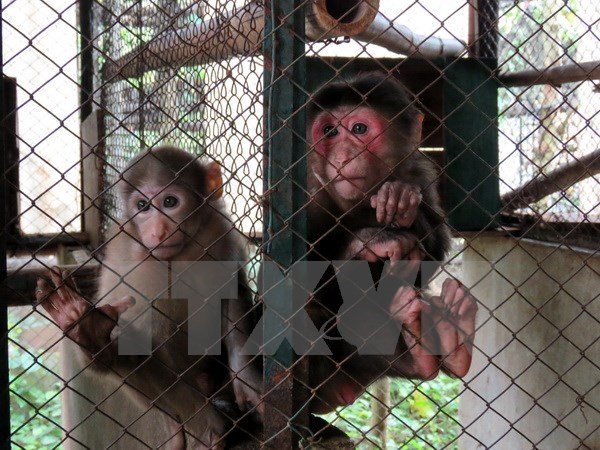 Animals released into wild in Quang Ninh, Vietnam environment, climate change in Vietnam, Vietnam weather, Vietnam climate, pollution in Vietnam, environmental news, sci-tech news, vietnamnet bridge, english news, Vietnam news, news Vietnam, vietnamnet ne