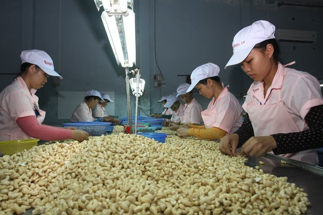 Material supply matters to cashew industry of Vietnam, vietnam economy, business news, vn news, vietnamnet bridge, english news, Vietnam news, news Vietnam, vietnamnet news, vn news, Vietnam net news, Vietnam latest news, Vietnam breaking news