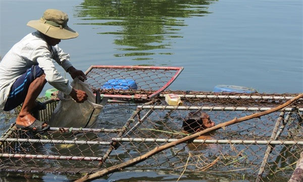 Bo River, cage fishing farmers, mass fish death, Vietnam economy, Vietnamnet bridge, English news about Vietnam, Vietnam news, news about Vietnam, English news, Vietnamnet news, latest news on Vietnam, Vietnam