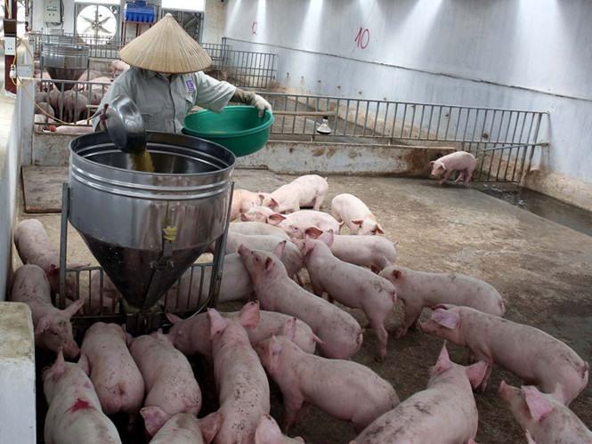 VN imports animal feed worth $1.8b in H1, vietnam economy, business news, vn news, vietnamnet bridge, english news, Vietnam news, news Vietnam, vietnamnet news, vn news, Vietnam net news, Vietnam latest news, Vietnam breaking news
