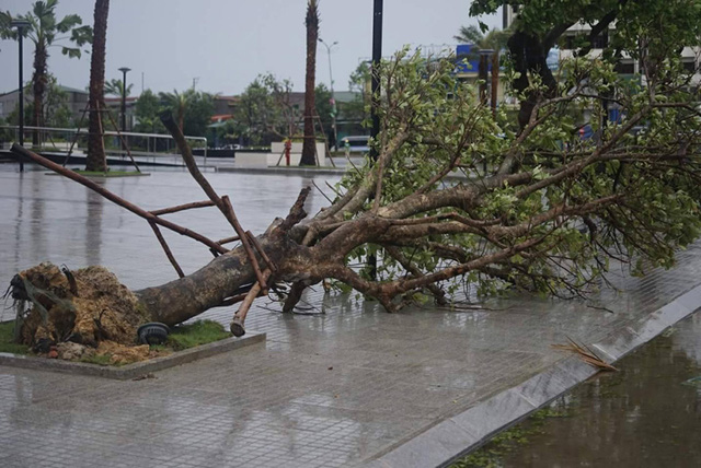 One killed, 13 missing as tropical storm Talas strikes central region, social news, vietnamnet bridge, english news, Vietnam news, news Vietnam, vietnamnet news, Vietnam net news, Vietnam latest news, vn news, Vietnam breaking news
