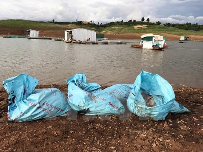 Oxygen shortage blamed for fish deaths in Kon Tum Province
