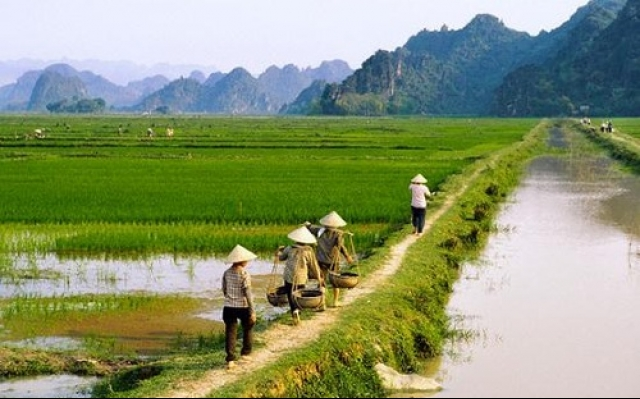 Small agri production must end, vietnam economy, business news, vn news, vietnamnet bridge, english news, Vietnam news, news Vietnam, vietnamnet news, vn news, Vietnam net news, Vietnam latest news, Vietnam breaking news