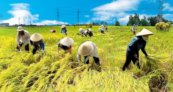 vietnam economy, business news, vn news, vietnamnet bridge, english news, Vietnam news, news Vietnam, vietnamnet news, vn news, Vietnam net news, Vietnam latest news, Vietnam breaking news,  agriculture, MARD, Vingroup