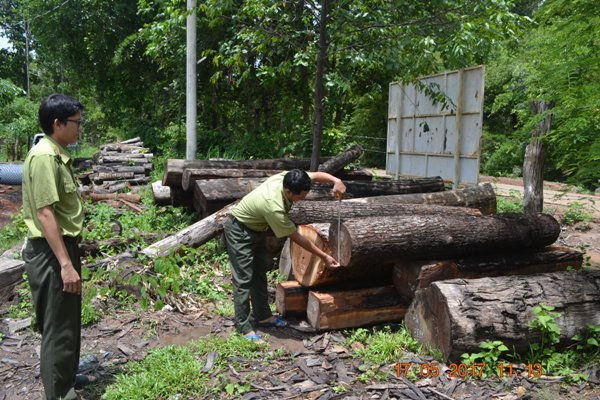 vietnam economy, business news, vn news, vietnamnet bridge, english news, Vietnam news, news Vietnam, vietnamnet news, vn news, Vietnam net news, Vietnam latest news, Vietnam breaking news,  deforestation, Central Highlands, natural forest closure