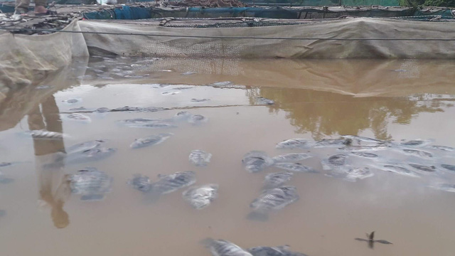 No compensation for mass fish deaths caused by hydropower discharge