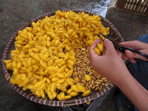 Vietnamese foodies, insects, grasshoppers, Silkworm pupae, Vietnam economy, Vietnamnet bridge, English news about Vietnam, Vietnam news, news about Vietnam, English news, Vietnamnet news, latest news on Vietnam, Vietnam