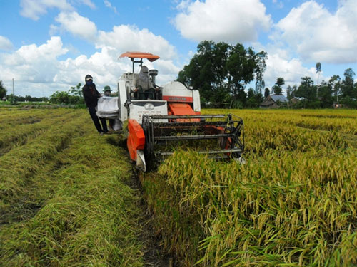 Mekong Delta authorities warn about excessive rice stock