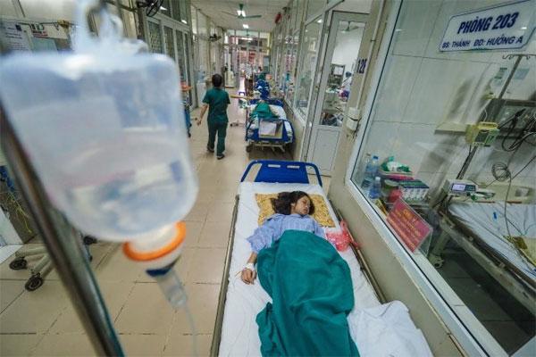 Ha Noi to take action to prevent dengue fever