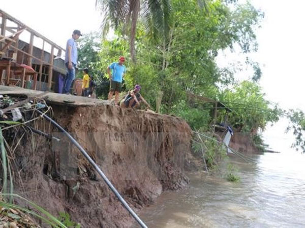Rising seas, threaten Mekong Delta, building sea dykes, Vietnam economy, Vietnamnet bridge, English news about Vietnam, Vietnam news, news about Vietnam, English news, Vietnamnet news, latest news on Vietnam, Vietnam