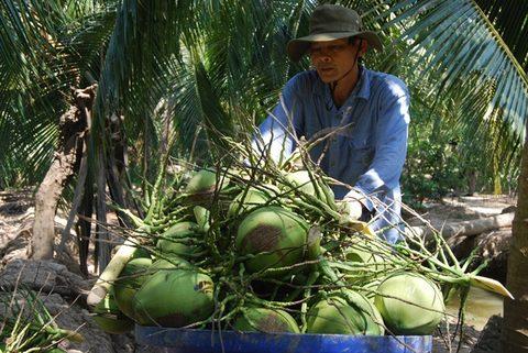 Vietnam pushes up fruit exports, vietnam economy, business news, vn news, vietnamnet bridge, english news, Vietnam news, news Vietnam, vietnamnet news, vn news, Vietnam net news, Vietnam latest news, Vietnam breaking news